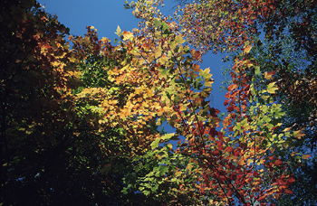 Low angle view of Autumn foliage in trees