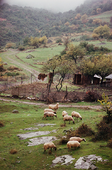 Sheep grazing on countryside in Greece