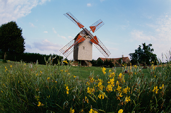 Windmill and wildflowers, Paris, France