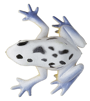 White spotted toy frog