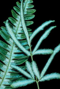 Green and white fernlike branches