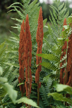 Stalks of flowers with ferns