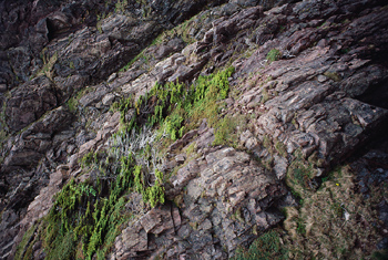Moss growing on rock cliff