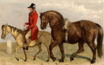 Traveling stallion being taken to serve a mare