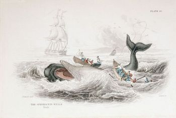 Harpooning a sperm whale