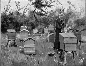 Apiary of wooden hives