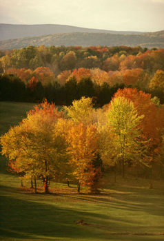 Field and autumn trees