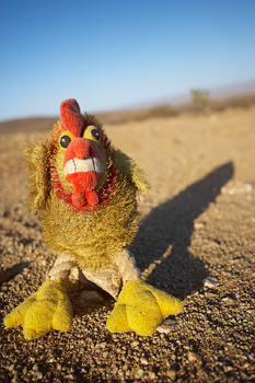 Chicken doll in the Mohave Desert, California