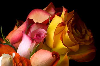 Close-up of roses in bouquet