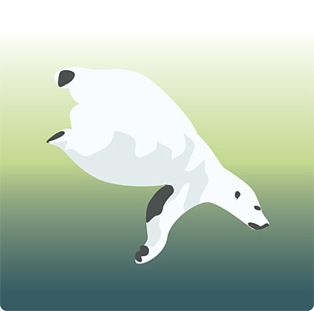 Polar bear swimming underwater