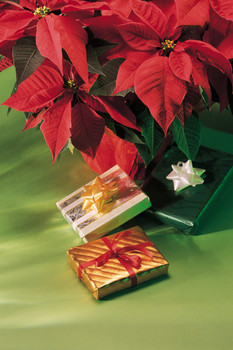 Presents by poinsettia