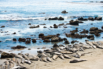Sea lions lying on beach