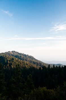 Forested mountain, Sequoia National Park, California