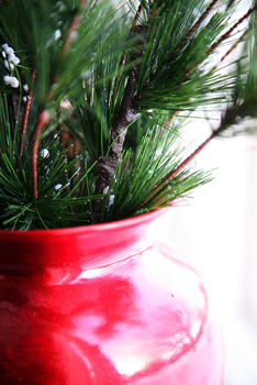 Pine boughs in red vase