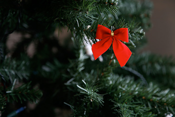 Red bow on bough of fir tree