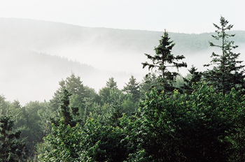 View of misty mountains from forest