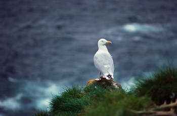 Gull perched on cliff over ocean