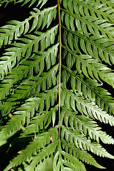 Cropped view of fern frond