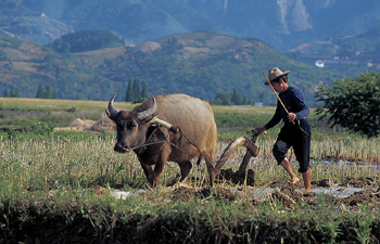 Man with ox and plow, China