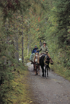 People horseback riding through forest