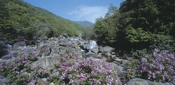 Colorful flowers in rocky ravine in forest