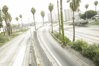 Highway and palm trees