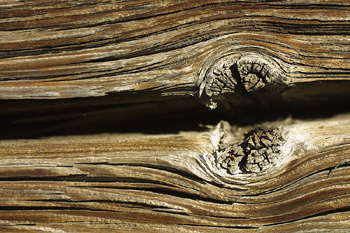 Weathered woodgrain with knothole