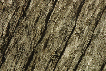 Cracked and weathered wood