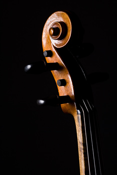 Tuning pegs on cello