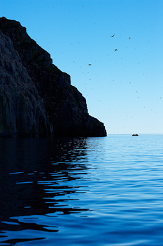 Raft and seabirds in Arctic