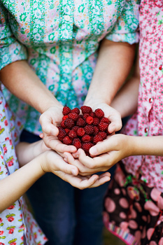 Cupped hands holding raspberries
