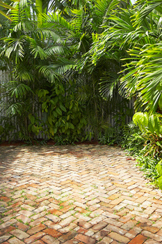 Brick patio with fence and palm trees