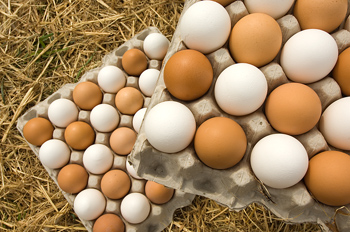 High angle view of two trays of fresh eggs
