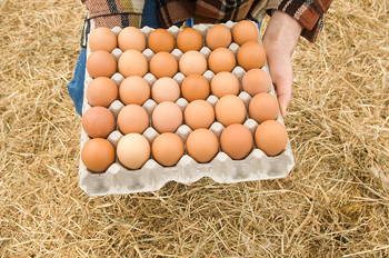 Kneeling farmer holding tray of fresh eggs