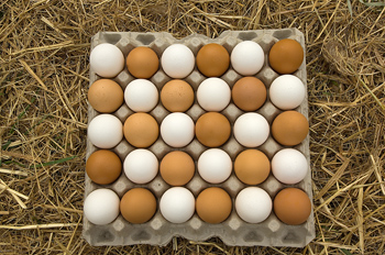Tray of fresh eggs alternating brown and white
