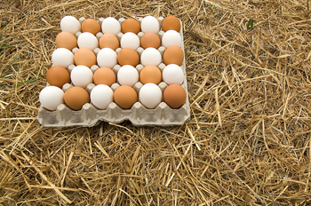 Tray of fresh eggs on hay