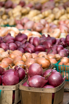 Varieties of fresh onions on table in market in New York City, USA