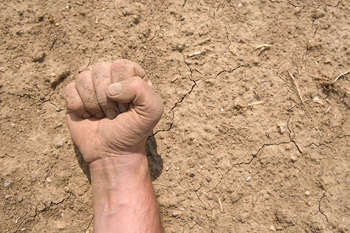 Fist of farmer against the soil during drought