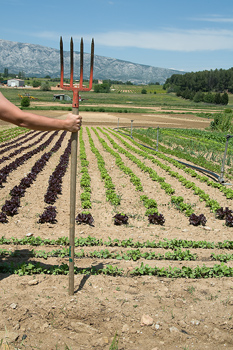 Farmer with pitchfork surveying plot of vegetable crops