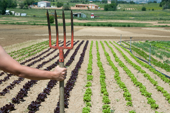 Farmer with pitchfork surveying plot of vegetable crops on farm