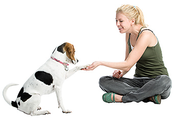 Young adult woman sitting and shaking paw of dog